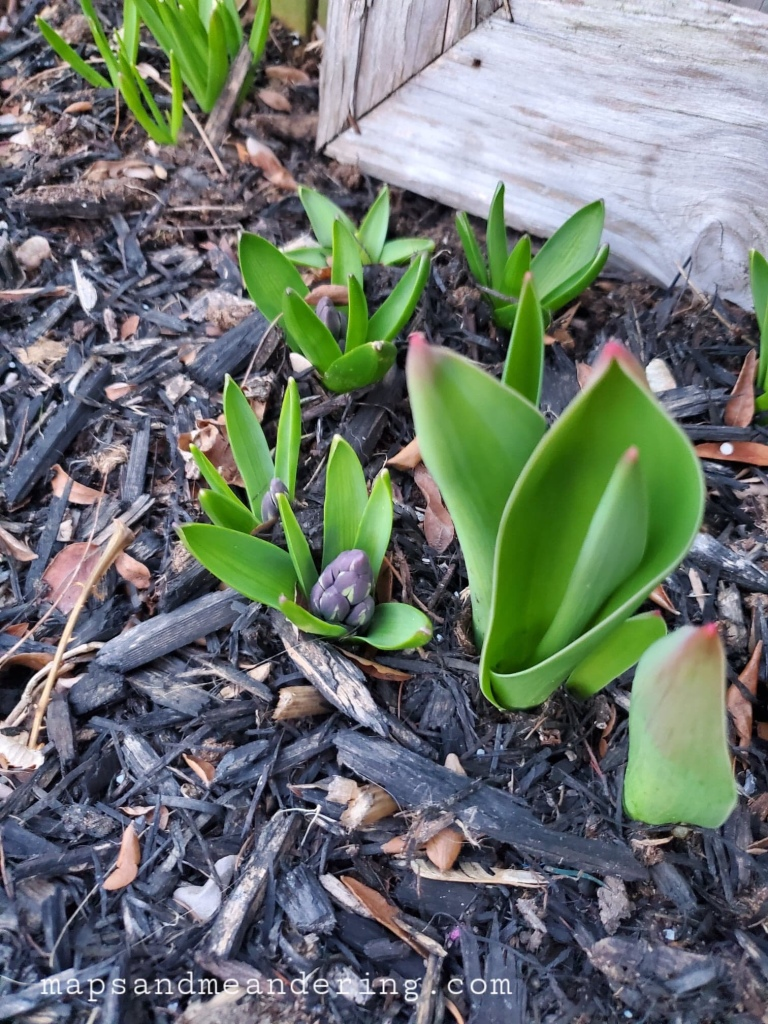 Flowers coming up in the Garden
