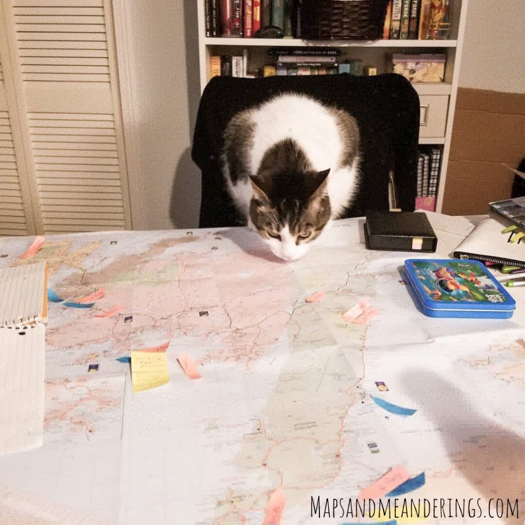 Cat looking at a map
